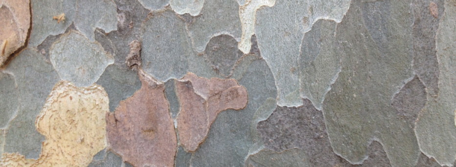 Denis Joffre Barcelona Tree detail
